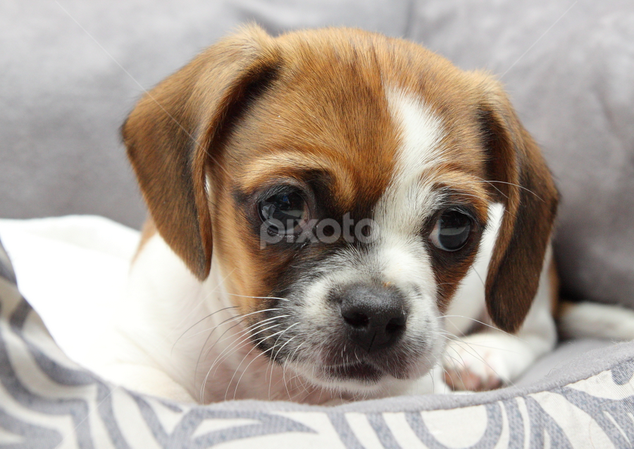 New Home by Brian Robinson - Animals - Dogs Puppies (  )