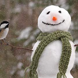 The Snowman and Chickadee by Jayne Gulbrand - Artistic Objects Other Objects ( bird, winter, cold, nature, outdoors, snowman, fun, chickadee )