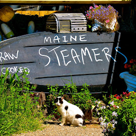 Waiting for Leftovers by Carl Testo - City,  Street & Park  Markets & Shops ( sign, wh, cat, seafood, restaurant )