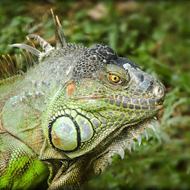 by Prasanna Bhat - Animals Reptiles