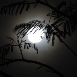 Moonlight by Gaurav Sinha - Nature Up Close Leaves & Grasses ( moon, shadow, india, night, leaves, moonlight )