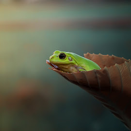 searching your name at the morning lights by Vianz . - Animals Amphibians ( frog, morning, amphibians, froglover, animal )