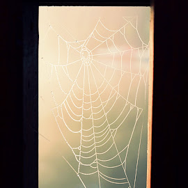 Catching the light  by Vladica Adamov - Nature Up Close Webs