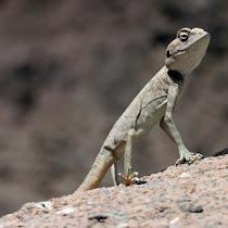 Wildlife of the Sinai Peninsula