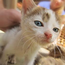 Cute kitten by Miroslav Marinkovic - Animals - Cats Kittens ( cat, kitten, happy, cute, abandoned,  )