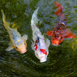 by Alain Labbe Alain - Animals Fish