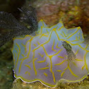 Halgerda Nudibranch