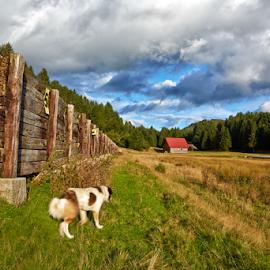 Looking for sheep by Stanislav Horacek - Landscapes Prairies, Meadows & Fields