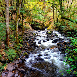Washington River Gorge Fall Colors by Tammy Tran - Landscapes Forests ( oregon, washington river gorge, fall foliage, trees, forest, streams, autumn colors, leaves, river )