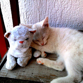 Sweet dreams  by Meli Cro - Animals - Cats Kittens ( home cat, kitten, cat, spoiled cat, friends forever, boy, sweet dreams, white cat, domestic cat,  )