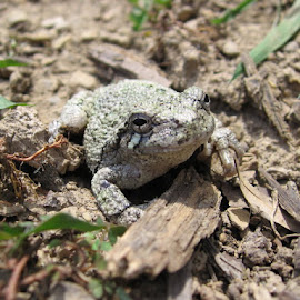 Frog In the Mudd by Mia Peoples - Animals Reptiles