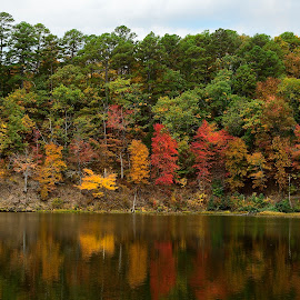 Fall Colors at Poe Creek Lake by Don Condley - Landscapes Forests ( forests, ozark national forest, reflections, ozarks, autumn colors, arkansas,  )