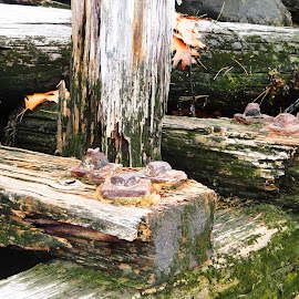 Seawood by Nick Borgerson - Artistic Objects Still Life ( wood, fall, seaweed, moss, sea, ocean, leaves, dock )