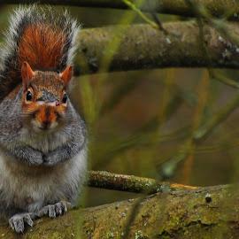 Squirrel by Richard James - Animals Other Mammals (  )