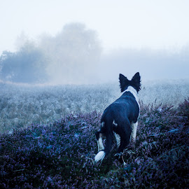 I know they are out there by Jesper Rasmussen - Animals - Dogs Puppies ( !animals, dogs, sigla, 2014_sigla, morning, mist )