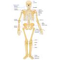 Chiropractic Glossary