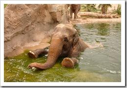 Una elefante
