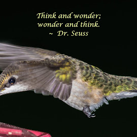 Think and Wonder; Wonder and Think by Jennifer McWhirt - Typography Quotes & Sentences ( animals, quotes, photographybyjenmcwhirt.com, hummingbird, hummers, dr. seuss, typography, birds )