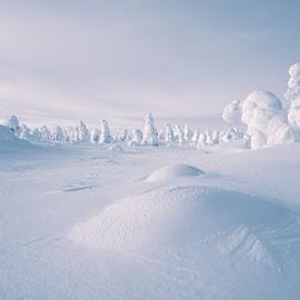 by Mikko Marttala - Landscapes Prairies, Meadows & Fields ( field, winter, riisitunturi, snow, trees, finland )