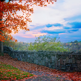 Devil's Hole Park by Darya Morreale - City,  Street & Park  City Parks ( tree, park, autumn, sunset, devil's hole, leaves, fall, color, colorful, nature )