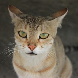 by Ritik Gupta - Animals - Cats Kittens