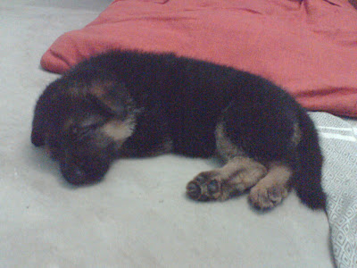 Puppy asleep on the floor. &#169;2008 YU YU DIN