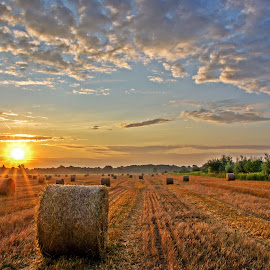 Sunrise by Zoran Rudec - Landscapes Prairies, Meadows & Fields ( field, sunrise )