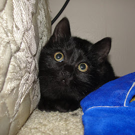 Shadow's First Day Rescued by Tammy Jones Perdue - Animals - Cats Kittens ( kitten, cute, black )