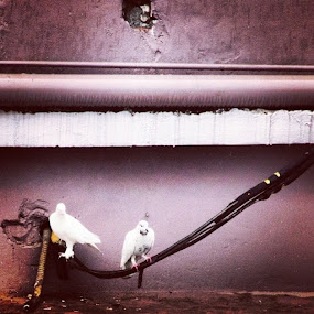 Dhanmondi, dhaka. June 2014 by Shiful Riyadh - Instagram & Mobile Android ( bird, abstract, colour, pigeon, golden point,  )