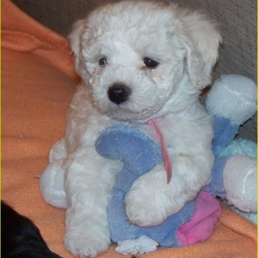 Puppy Dog Theme Crazy Home LOGO-APP點子