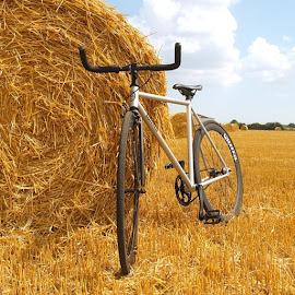 New bike... #bike #bicycle #new #quella #quellabicycle #quellabikes @quellabikes #field #haybales #uk  #edit #gold #jw #berrr #kings #neco #quando by Joseph Stone - Transportation Bicycles (  )