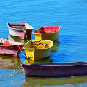 A Whole Bunch of Small Boats by Alan Chew - Transportation Boats ( , water, device, transportation, blue, orange. color )