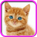 Talking, Dancing Cat. 1.1.7 icon