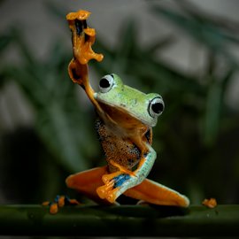 by Robert Cinega - Animals Amphibians (  )