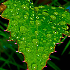 Wet leaf by David Winchester - Nature Up Close Leaves & Grasses