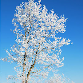White tree by Eugenija Seinauskiene - Nature Up Close Trees & Bushes (  )