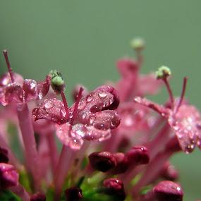 ♥ by Mirela Korolija - Flowers Tree Blossoms