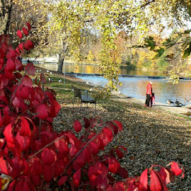 by Ivka Njegac - City,  Street & Park  City Parks ( fall, color, colorful, nature,  )