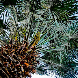 Pretty Palm by Barbara Brock - Nature Up Close Trees & Bushes ( palm tree, texture, palms, looking up a palm tree )