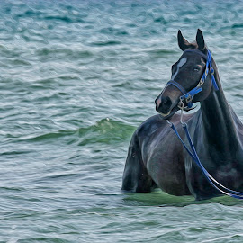 gabe by Joy Jose Casusi - Animals Horses ( stallion, gabriel, horse, sea, thoroughbred )