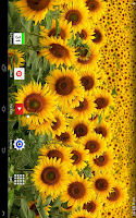 Screenshot of Flowers Wallpaper