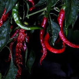by Todd Klingler - Nature Up Close Gardens & Produce (  )