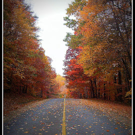 Fall Road by Denny Paul - Nature Up Close Trees & Bushes ( fall, trees, maryland, road, leaves )