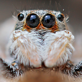by Ian Fearn - Animals Insects & Spiders