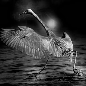 In The Dark of Night by Sheen Deis - Black & White Animals ( nature, black and white, herons, nature of blose, bird wingspans, , bird, fly, flight )
