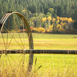 by Jim Davis - Landscapes Prairies, Meadows & Fields ( fall, color, colorful, nature )