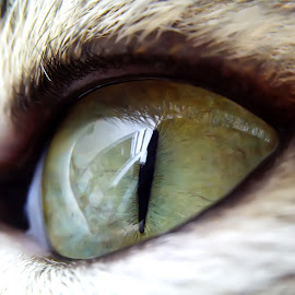 my cat eyes v.2.01 by Hendrata Yoga Surya - Instagram & Mobile Android