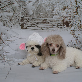 by Vickie Harris - Animals - Dogs Puppies