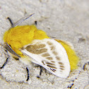 Flannel moth