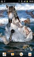 Screenshot of Horse Pictures Live Wallpaper
